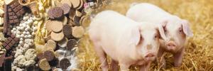 Former foodstuffs & piglets
